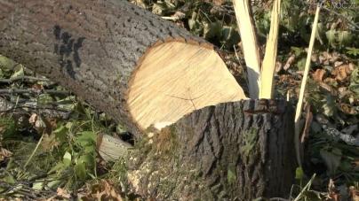 За 12 зрубаних дубів житель області отримав 120 годин громадських робіт