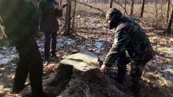 На 400 тисяч гривень вкрали дубів у Новоград-Волинському районі