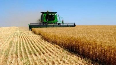 Аграрний сектор економіки України: сучасний стан та перспективи розвитку