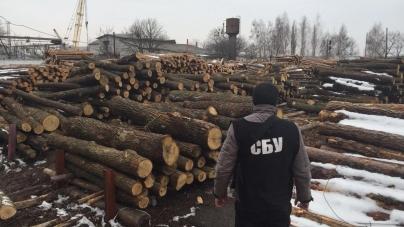 Керівники держлісгоспу під виглядом санітараних рубок крали ліс і торгували ним