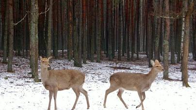 У лісах області водяться майже півтори тисячі оленів та понад 160 вовків