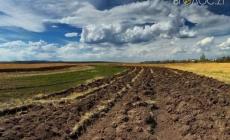 На Житомирщині товариство незаконно орендувало радіоактивно забруднені землі, вартість яких сягає 100 мільйонів гривень
