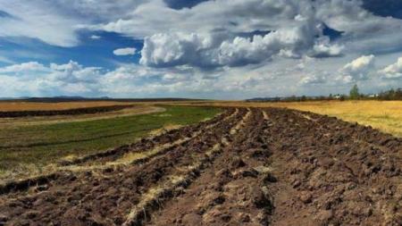 Мораторій на продаж землі скасують попри звернення облрад, ‒ нардеп від «Слуги народу»