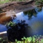 Трагедія в Олевському районі: поки жінка поралася на городі, у копанці втопилася її 2-річна дитина