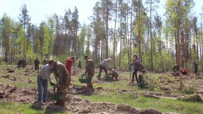 Вже дев'яту ділянку лісу  висадили журналісти Житомирщини