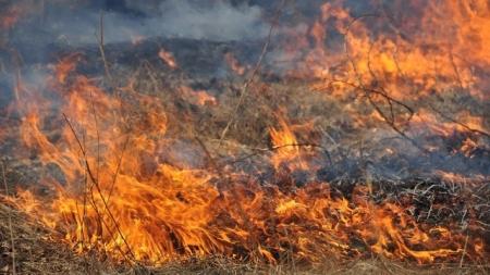 Понад 47 гектарів сухої трави вже вигоріло цьогоріч на Житомирщині
