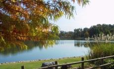 На Житомирщині підприємець кілька років незаконно використовував величезний ставок