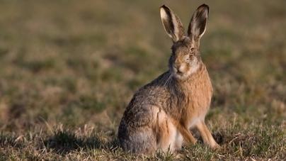 Під Житомиром затримали браконьєра, якому за вбитого зайця загрожує штраф – 8 тисяч гривень