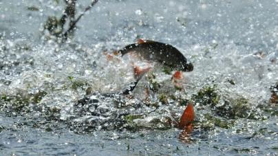З початку нересту на водоймах області вилучили 274 браконьєрські знаряддя лову риби