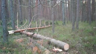 У заказнику на Житомирщині незаконно зрізали дерева