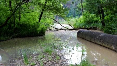 Сеча у житомирській воді: щороку у Тетереві зростає кількість амонію…