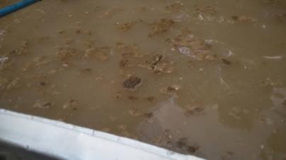 Зафіксований на відео та фото викид фекалій у Тетерів водоканал вважає фейковим