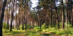 На півночі області створили лісовий заказник