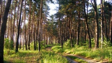 Повідомлення про те, що на Житомирщині згоріло 100 гектарів лісу – не відповідає дійсності