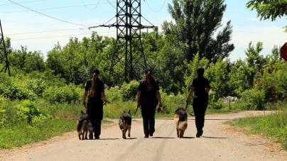 Якщо твій помічник – чотирилапий: про те, як у Житомирі навчають поліцейських-кінологів. ЛОНГРІД
