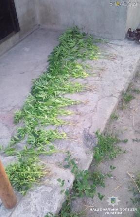 На городі у 68-річної житомирянки знайшли 150 кущів марихуани