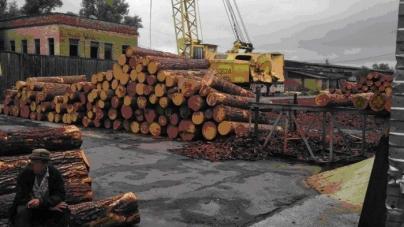 У лісгоспах області незаконно вирубували ліс та вивозили до країн Азії