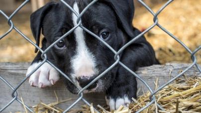 Житомиряни просять заборонити продаж тварин на Житньому ринку