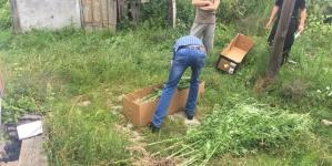 510 рослин снодійного маку правоохоронці зібрали на городі жительки Овруцького району