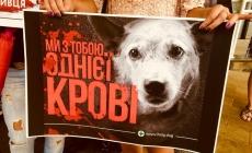 У Житомирі зоозахисники висловили обурення вбивством собак на комунальному підприємстві у Миколаєві (ФОТО)