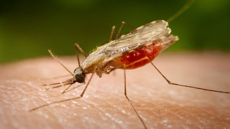 11 випадків малярії зафіксували у жителів області