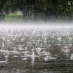 Якою буде погода на Житомирщині 16 жовтня