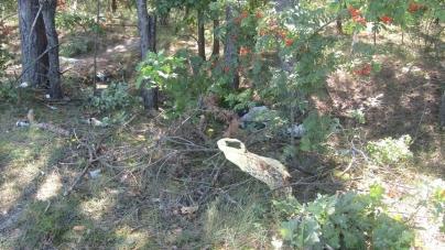 У Житомирі пенсіонер зарубав знайомого та викинув тіло біля кладовища