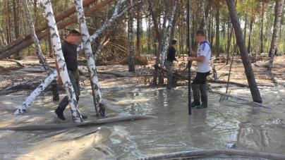 Житомирщина: 100 кримінальних проваджень за фактами нелегального видобутку бурштину з початку року