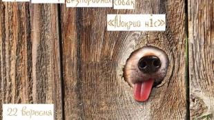 Мокрий ніс: у Житомирі відбудеться перша виставка безпородних собак