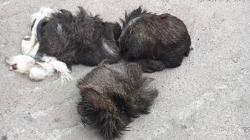 На Житомирщині виявили рештки Червонокнижної тварини