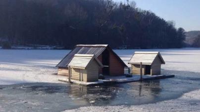 У районі гідропарку замерзають білі лебеді. Одного з птахів забрав житомирянин (ФОТО)