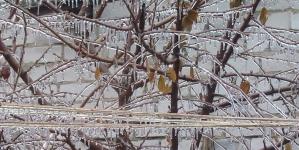 Через обледеніння мережі у деяких районах Житомира зупинилися тролейбуси