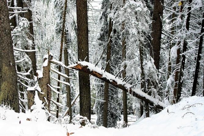 На Житомирщині під час різки деревини загинув працівник лісгоспу