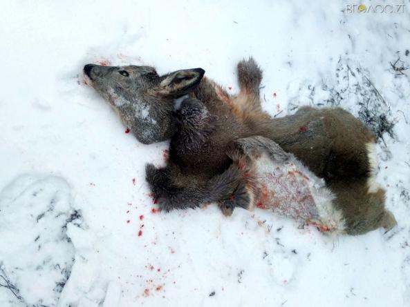 У Коростишівському районі затримали браконьєрів, які вбили козулю
