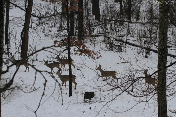 У лісах Житомирщини почали рахувати тварин
