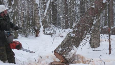 На Житомирщині під час валки дерева у лісі загинув селянин