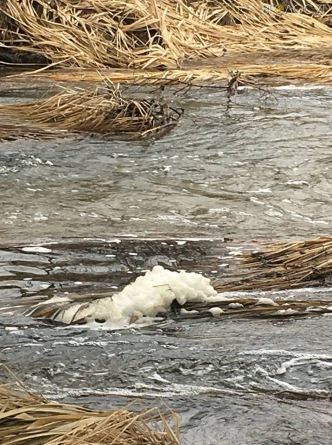 Річку Хомора на Житомирщині знову забруднили відходами