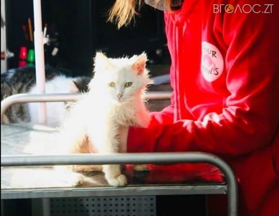 У Житомирі декілька днів безкоштовно стерилізуватимуть безпритульних котів