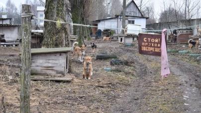 Новоград-Волинська міськрада відреагувала на скарги стосовно організації, яка опікується безпритульними собаками