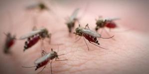 Військова частина під Житомиром закупить на 64 тисячі аерозолі від комарів