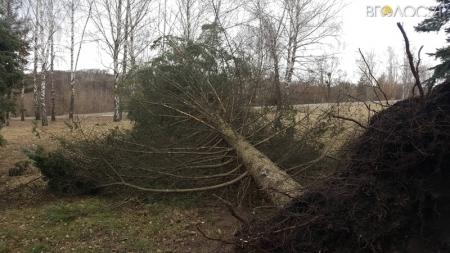 Пориви вітру у Житомирі повиривали десятки дерев у центрі міста