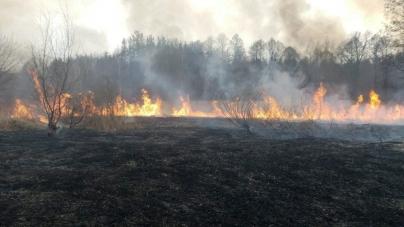 Пекельна весна: на Житомирщині рятувальники вже ліквідували 510 пожеж в екосистемах. Кажуть, раніше такого не було