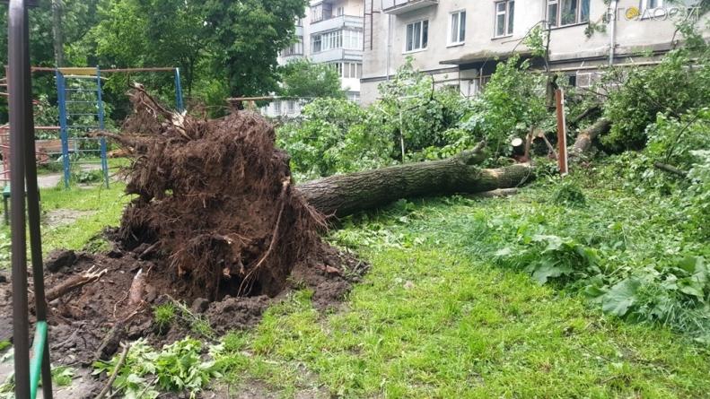 Вечірній буревій наробив лиха у Житомирі (ФОТО)