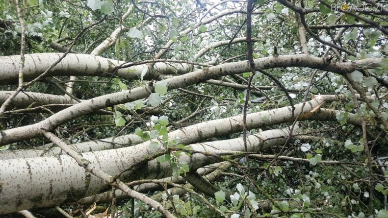 Злива залишила кілька населених пунктів області без електрики