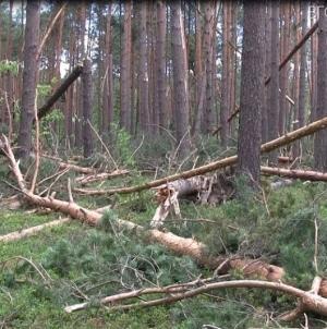 Відомі результати розслідування смерті лісоруба в Ємільчинському районі: чоловік зняв каску, щоб не заважала
