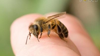 Двоє чоловіків, яких покусали бджоли, потрапили до реанімації