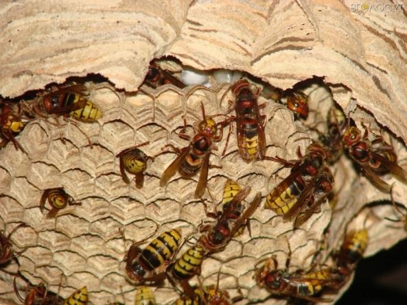 У коростенській школі рятувальники у спецкостюмах знешкодили кубло небезпечних комах