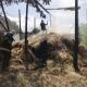 На Житомирщині 5-річна дитина спалила 10 тонн сіна