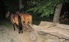 П'яна сусідка вкрала пару коней разом із возом, щоб з'їздити на батьківщину