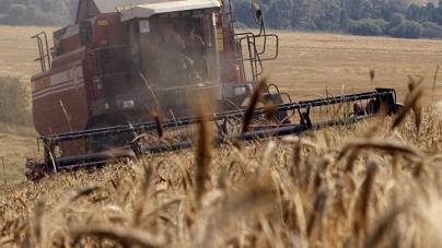 Житомирщина: урожай із 160 га земель оборони, які незаконно засіяли, прокуратура зібрала та продала